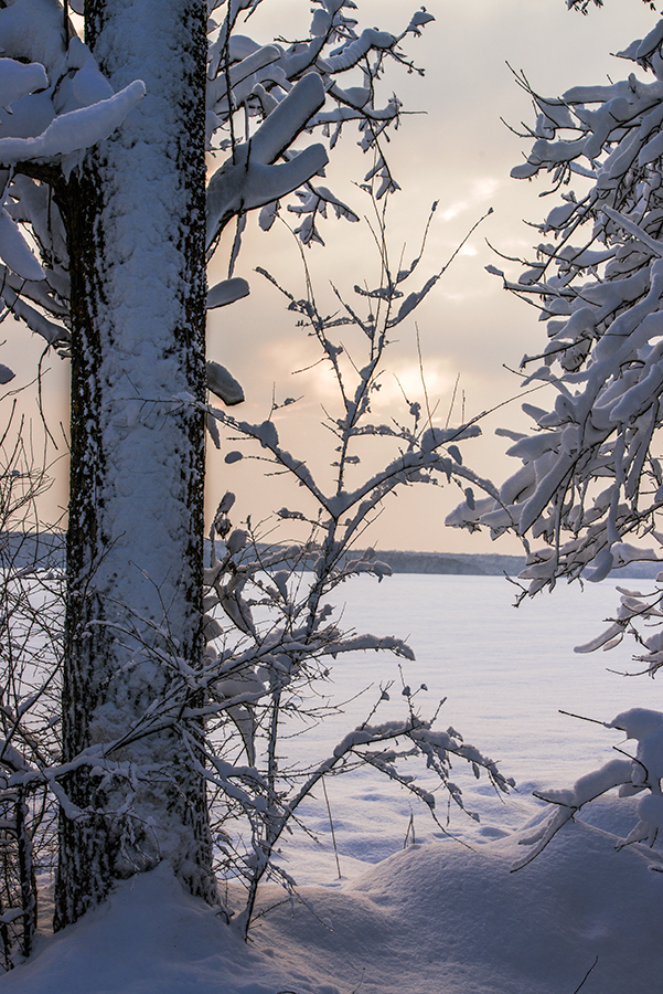 Iarna la Caldarusani